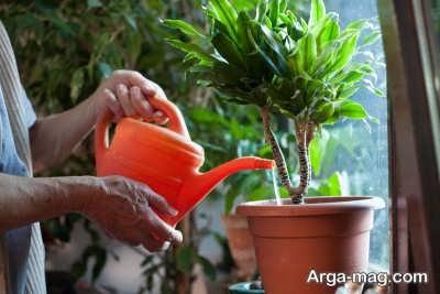 نکات مهم در مورد آبیاری گیاهان آپارتمانی