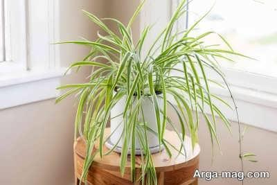 تعیین فضای مناسب برای نگهداری از گیاهام