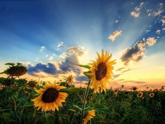 سری اول عکس پروفایل طلوع خورشید