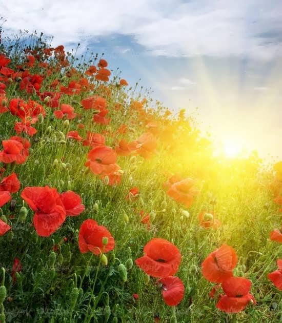 تصویر پروفایل جدید و جالب از طلوع خورشید