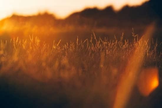انواع تصویر پروفایل از طلوع خورشید