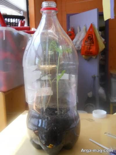 چگونگی کاشت گل در بطری نوشابه