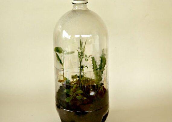 آشنایی با نحوه کاشت گل در بطری نوشابه