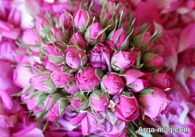 روغن گل سرخ یا گل محمدی