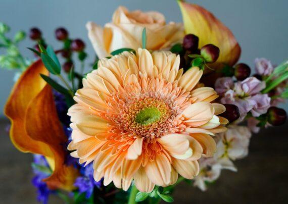 آشنایی با روش های رفع پژمردگی گل ها