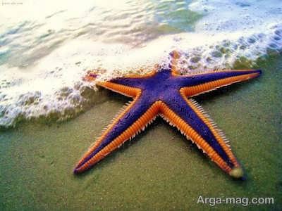 آشنایی با ستاره دریایی سمی