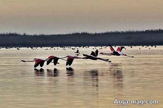 دریاچه آلماگل
