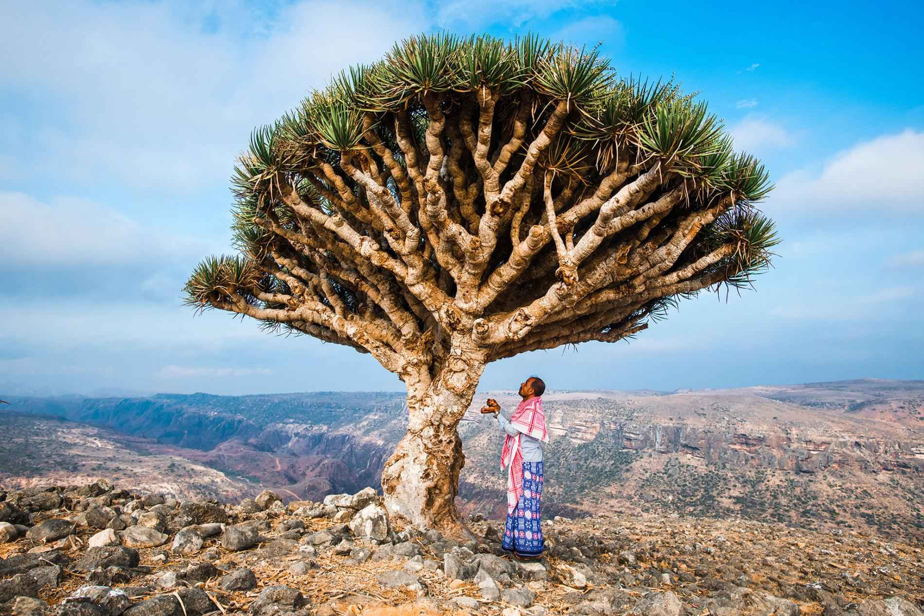 طبیعت جزیره سقطرا