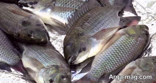 ویژگی ظاهری ماهی خوب