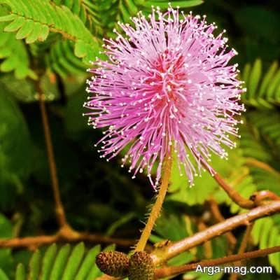 شرایط لازم برای پرورش گل قهر