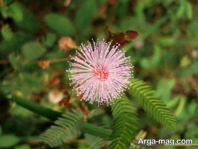 مراقبت های لازم برای پرورش گل قهر