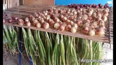شرایط مورد نیاز برای کاشت گیاه