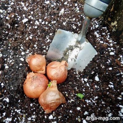 روش های کاشت بذر گیاه