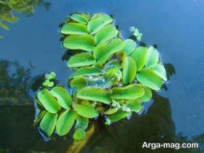 معرفی بهترین گیاهان آکواریومی و نحوه نگهداری از آن ها