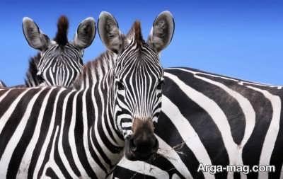 جملات زیبا درباره حیوانات