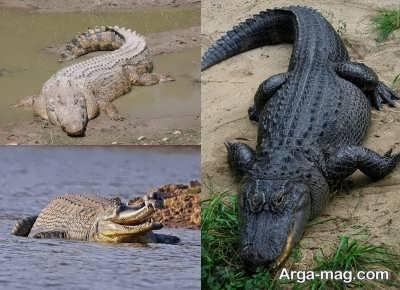 خصوصیات دم تمساح ها