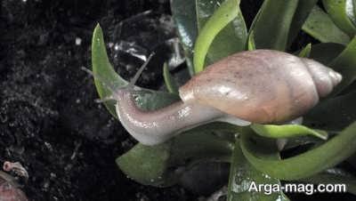 خسارات حلزون ها به باغات