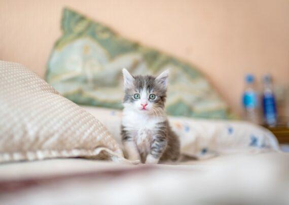 آشنایی با اصول مراقبت از بچه گربه