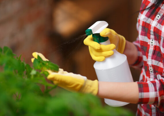 آشنای با روش های دفع آفات ارگانیک