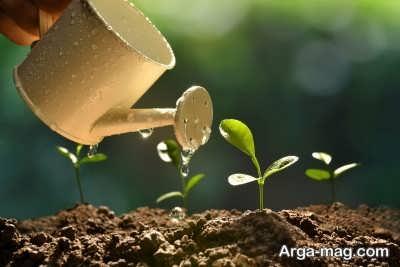 انجام آبیاری بستر گیاه برای رشد بهتر