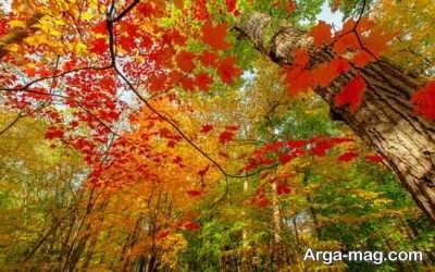 شعر احساسی در مورد پاییز