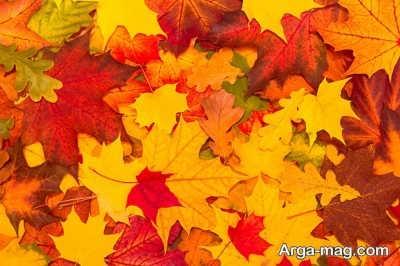 شعر دلنشین در مورد پاییز