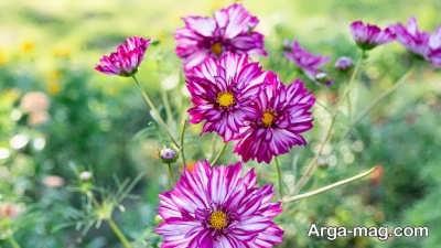 شعر زیبا در مورد گل
