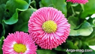 اشعاری در مورد گل