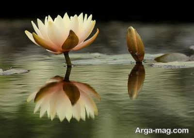شعر احساسی در مورد گل