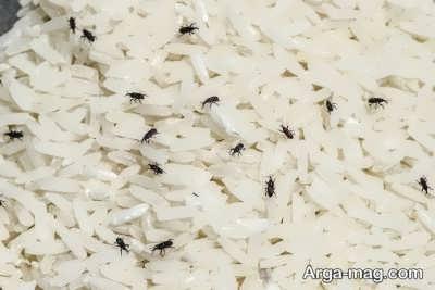 روش های خانگی برای رفع شپشک های برنج