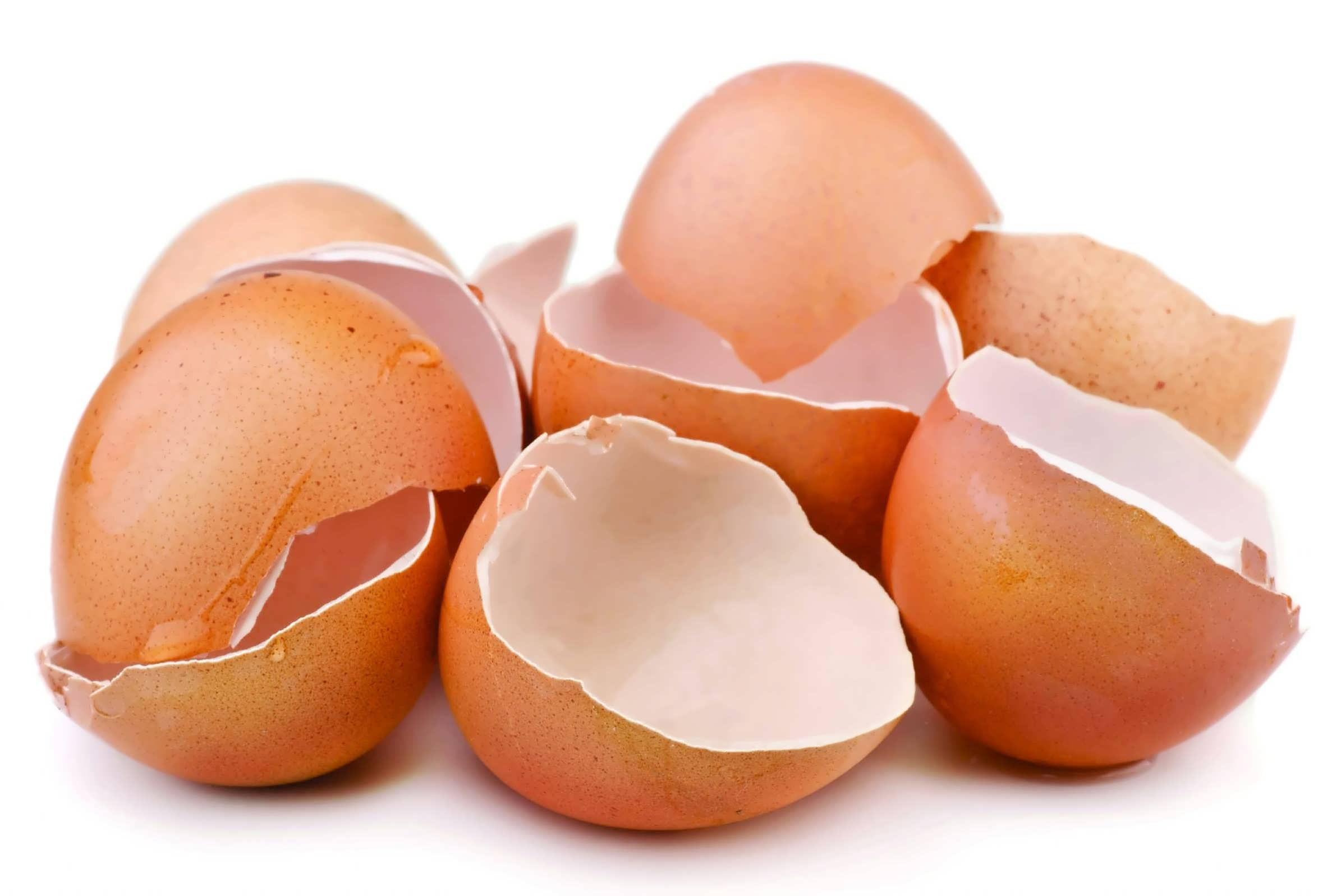 خواص مختلف پوست تخم مرغ