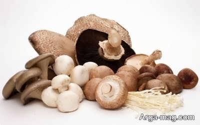 اطلاعاتی درباره قارچ ماشروم