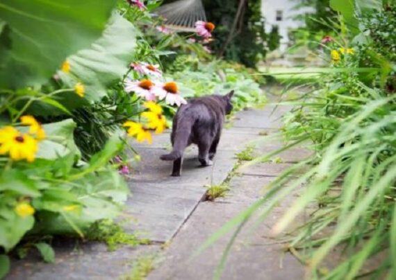 دور کردن حیوانات از باغچه