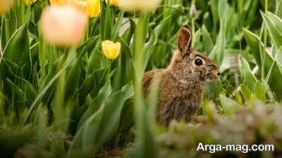 دور کردن حیوانات از باغچه با چند ترفند ساده