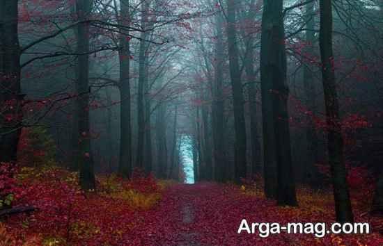 جنگل تریر