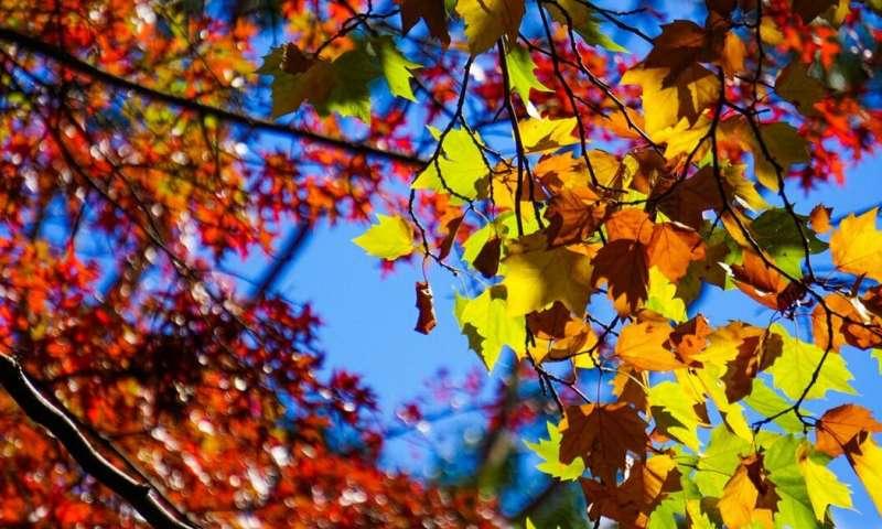 انشا در مورد پاییز