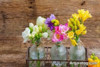 اشنایی با انواع کاشت گیاه فریزیا