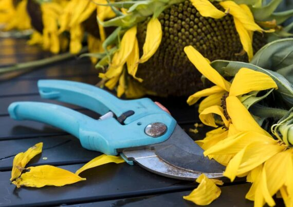 آشنایی با قیچی باغبانی