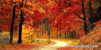 علت های عوض شدن رنگ برگ درختان