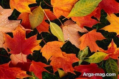 منشا اصلی عوض شدن رنگ برگ درختان