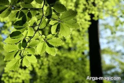 برگ در خواب نشانه های مختلفی دارد.