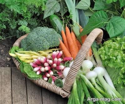نحوه کاشت سبزیجات در زمستان