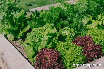 کاشت سبزیجات در زمستان و اصولی که باید جدی بگیرید