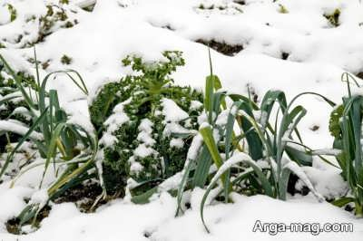 اصول کاشت سبزی در زمستان