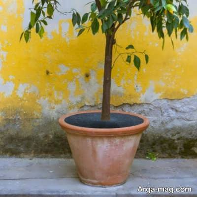 مراقبت از درخت در برابر سرمازدگی
