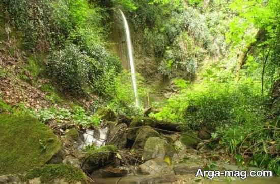 جنگل رامیان