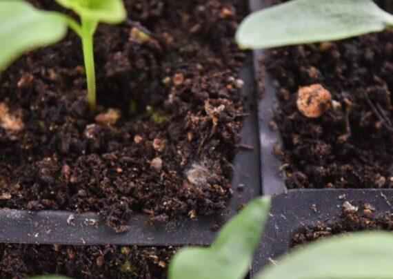 اصول از بین بردن کپک خاک گلدان