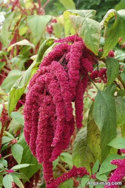 انواع روش های کاشت گیاه