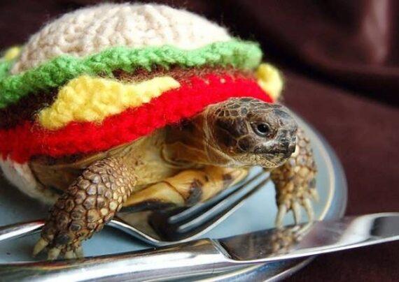 دمای مناسب برای نگهداری از لاکپشت ها چقدر است؟