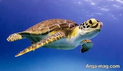 بیماری های لاکپشت